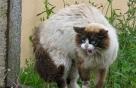 고양이 털 색깔 따라 공격성 다르다