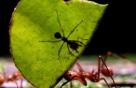 개미 네트워크 모방하면 인터넷 비용 준다