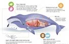 포유류 고래 '수중생활 적응 DNA' 찾았다
