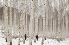 자작나무 숲에서 겨울을 전송한다