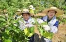 NH농협금융, 김용환 회장·민상기 이사회 의장 등 농촌 일손 돕기