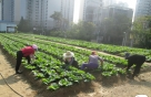 농사짓고 이웃도 돕고…광진구 '자투리 텃밭 기부의 날'