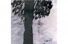 의연한 나무