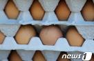 시중에 유통된 '살충제 달걀' 48만개 추적 압류