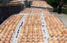 인천 친환경 산란계 농장서도 '살충제 계란' 발견