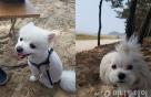 강아지가 즐기는 쇼핑 시간 '산책'