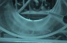 어린 뱀장어 사육기술 개선으로 초기 생존율 높여
