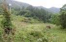 '감정가 800만원' 산기슭 땅, 2억원에 팔린 이유