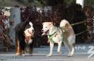 [오늘의 국회토론회-20일]유아동 반려동물 안전교육 의무화 필요한가