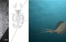 '동물두뇌 진화·곤충겹눈 기원' 5억2천만년 비밀 풀리다