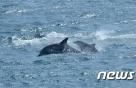 잔인하게 잡은 돌고래 수입 금지…멸종위기종 보호 강화