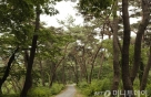 봉곡사 소나무 숲<strong>길</strong>에 가면