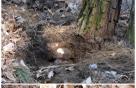소나무 뿌리 버섯 '복령'서 폐암 新 항암물질 발견