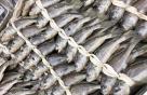[바다정보다잇다] 차례상 대표 생선 도미와 조기의 모든 것