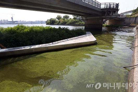 [사진]녹색으로 물든 한강