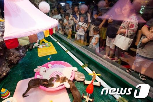 [사진]'귀여운 아기수달 만나러 오세요!'