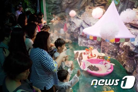 [사진]'아기 수달 5공주 탄생'