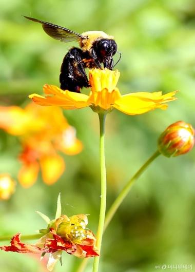 [사진]꽃과 벌
