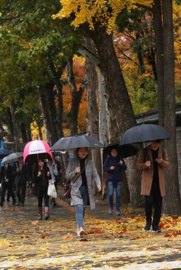 [사진]가을비에 떨어진 낙엽 밟으며