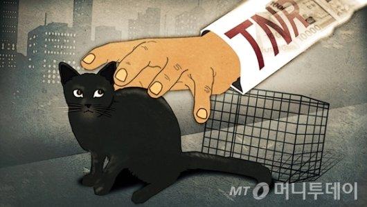 """14만 길냥이의 외침…""""누굴 위한 중성화냥"""""""