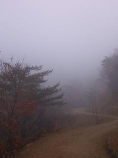 핸드폰으로 찍은 백운산 오솔길의 4계-봄