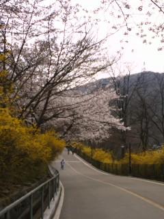 남산의 봄