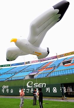 삼성의 이승엽(36)이 홈런을 친 후 홈으로 들어오고 있다.