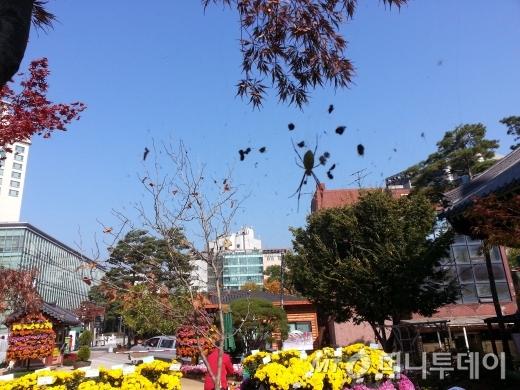 2013년 10월27일 오전11시경, 서울 조계사 경내