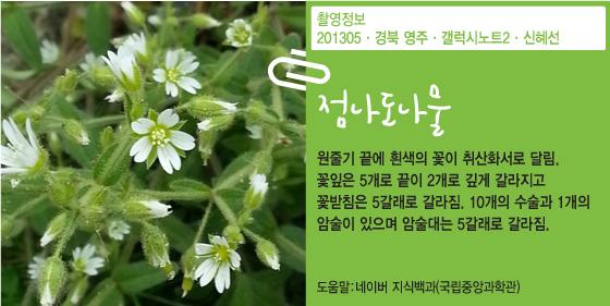 [신혜선의 잠금해제]외래어 남발하는 KBS와 '퀸 잉글리쉬'