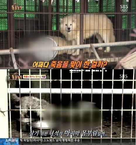 23일 오전 SBS 'TV 동물농장'에서는 사람의 보살핌을 받지 못하고 방치된 개들의 충격적인 사연이 공개됐다./ 사진=SBS 방송화면 캡처