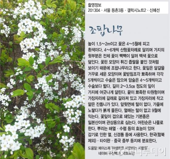 [신혜선의 잠금해제]'유쾌한 원순씨'의 한숨