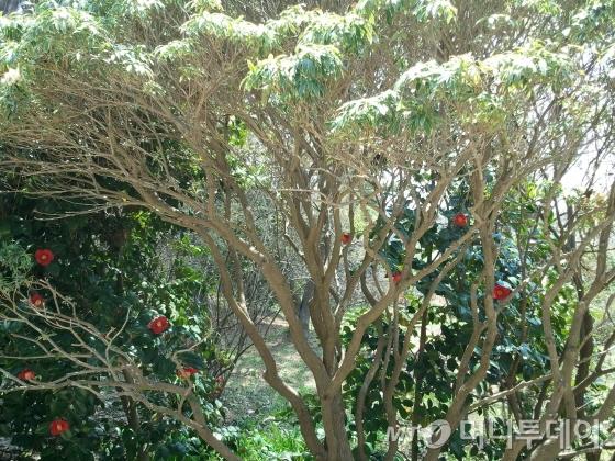 천리포 수목원의 동백과 베롱 /사진제공=작은경제연구소