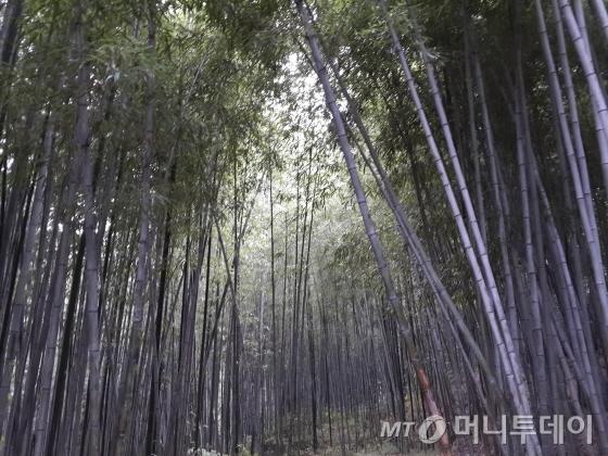 담양 죽록원 /사진제공=작은경제연구소