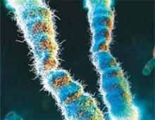 텔로미어' 모습을 시각화한 이미지