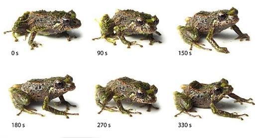 미 오하이오주 케이스웨스턴리저브대 연구팀이 공개한 개구리 사진
