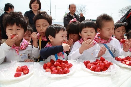 충남 논산시에서 열리는 '논산 딸기축제'에서 아이들이 갓 수확한 딸기를 먹고 있다. /사진=논산시청 홈페이지