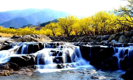 전남 구례군의 한 계곡 인근에 피어난 산수유 꽃. /사진=구례군청 홈페이지