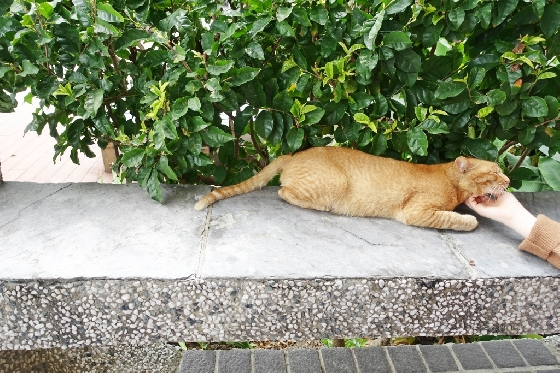 타이동 곳곳에서 길이나 건물 난간에 누워서 낮잠을 자는 고양이를 만날 수 있다. 이곳 고양이들은 사람의 손을 경계하지 않는다. /사진=김유진 기자