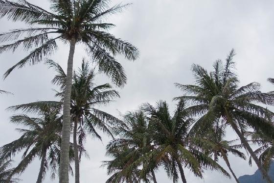 제주도보다 남쪽에 있는 열대 기후의 섬인 타이동에는 야자수가 많다. /사진=김유진 기자