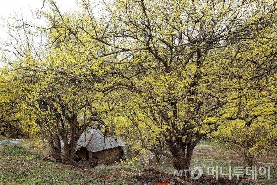 폐가에도 꽃은 어김없이 피었다. /사진=이호준 시인·여행작가