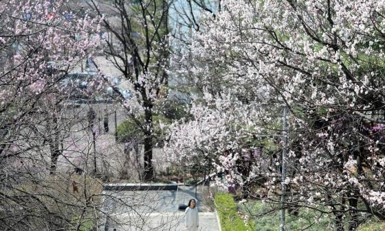 7일 경기 과천 서울랜드에서 사람들이 꽃망울을 터뜨리기 시작한 벚꽃을 구경하고 있다. /사진=뉴시스