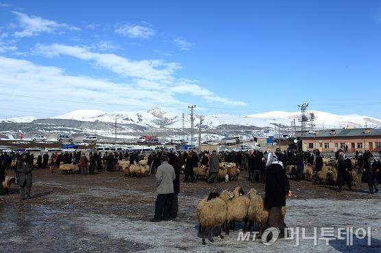 터키의 동부 반에 있는 가축시장. 여성은 갈 수 없는 곳이다. /사진=이호준 시인·여행작가