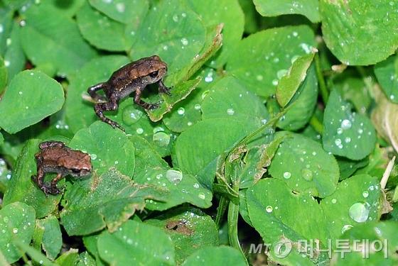 두꺼비  /사진=뉴스1