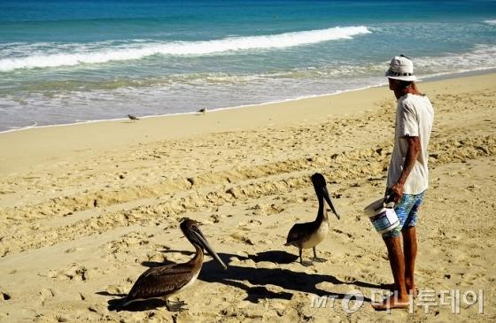 카리브해변에서 펠리컨에게 먹이를 주는 노인/사진=이호준 시인·여행작가