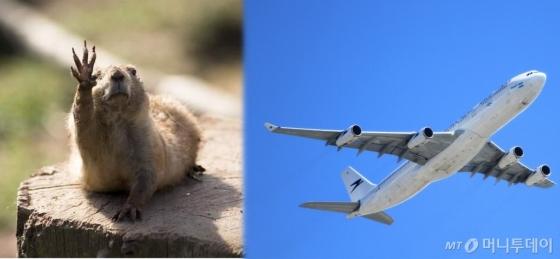 비행기야 가지마..ㅠㅠ/사진=인터넷 커뮤니티