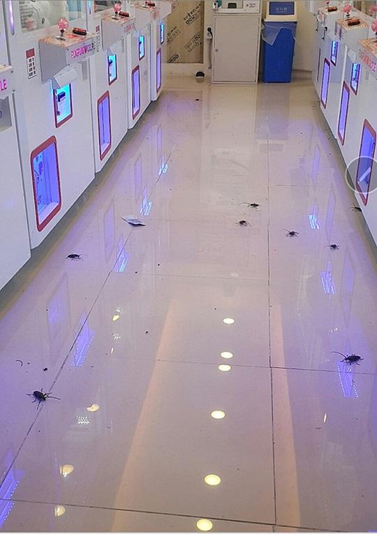 서울 강북구에 위치한 인형뽑기 매장에 하늘소 떼가 출몰했다./사진=온라인 커뮤니티