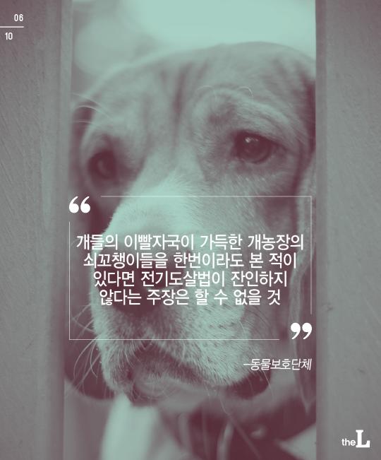 [카드뉴스] 고통받는 동물들…처벌은?