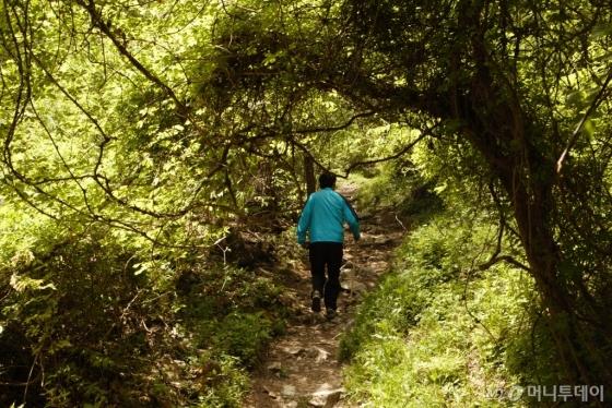 온갖 넝쿨이 어우러진 숲길. /사진=이호준 시인·여행작가