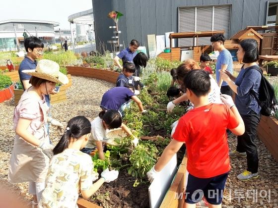 가락몰 도서관 옥상 텃밭에서 어린이들이 작물을 수확하고 있다./사진=이우기 작가 /사진제공=서울시 사회적경제지원센터