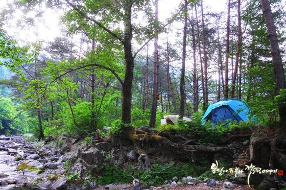 캠핑. /사진제공=봉달이&루라의 캠핑이야기